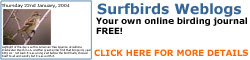 Surfbirds Blogs Click Here!