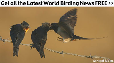 Weekly Birding Email News