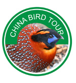 China Bird Tour