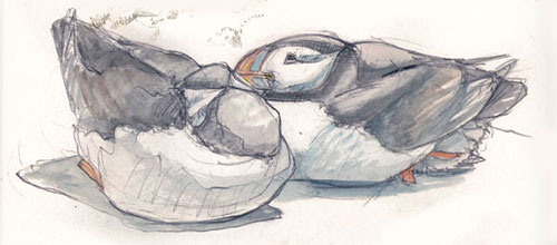 Puffins by Katrina Cook
